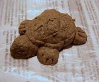sawdust clay turtle